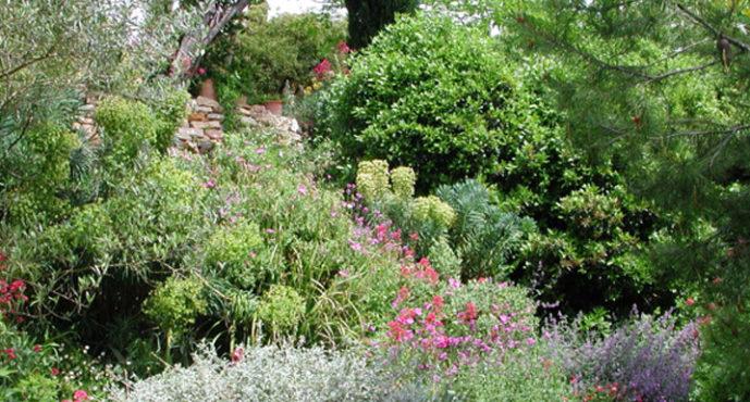 Les plantes, alliées du confort de la maison