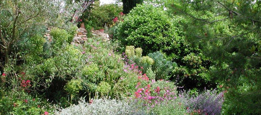 aménagement extérieur plantes