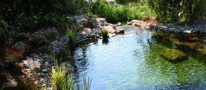 piscine écologique naturelle