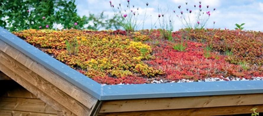 Les toitures végétalisées : de multiples atouts!