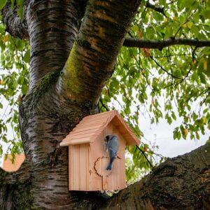 mangeoire nichoir oiseaux