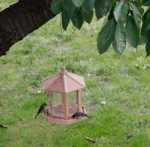 mangeoire oiseaux kiosque Brocéliande