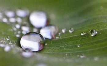 Eau de pluie : collectez, économisez !
