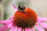 Les insectes, alliés précieux du jardin