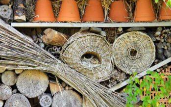 Pourquoi installer un hôtel à insectes