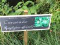 A l'école des plantes, pour apprendre l'autonomie