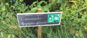 Les plantes médicinales Uzes Gard