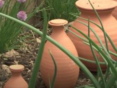 Arroser ses plantes en économisant de l'eau et du temps grâce aux ollas