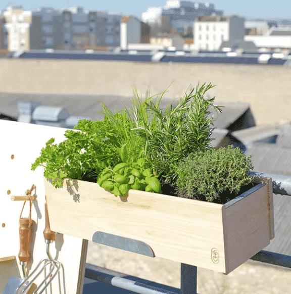 plantes bio françaises aromatiques