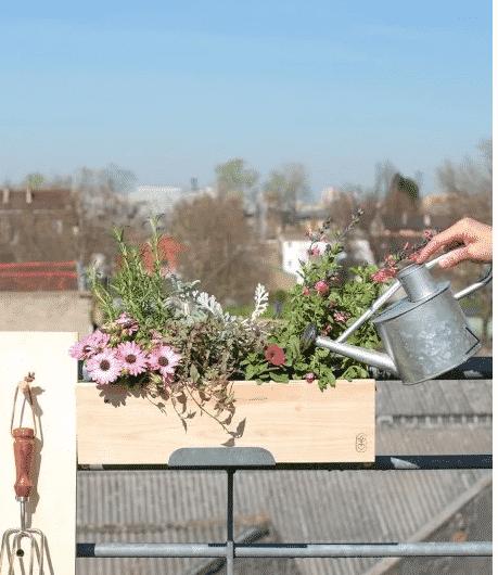 fleurs et plantes locales
