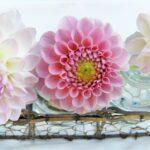 fleurs écologiques
